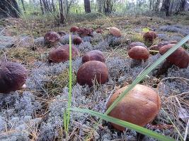 Выбираем грибные места.