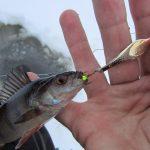 Улов, зимняя рыбалка