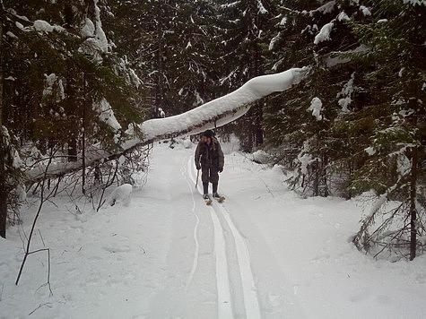 Зимний маршрутный учет