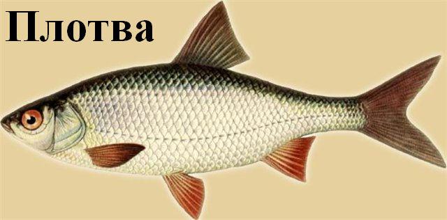Календарь рыболова: январь – не повод прятаться от природы